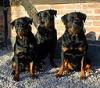 Kastor, Nando och Viva