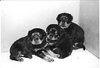 Puppies: Daim, Diamint and Dixi